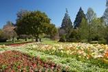 Blenheim;bloom;blooming;blooms;Botanic-Garden;Botanic-Gardens;Botanical-Garden;Botanical-Gardens;flower;flowers;fresh;grow;growth;Marlborough;N.Z.;New-Zealand;NZ;Pollard-Park;poppies;renew;S.I.;season;seasonal;seasons;SI;South-Is.;South-Island;spring;springtime;tulip;tulips