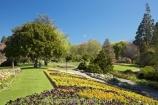 Blenheim;bloom;blooming;blooms;Botanic-Garden;Botanic-Gardens;Botanical-Garden;Botanical-Gardens;flower;flowers;fresh;grow;growth;Marlborough;N.Z.;New-Zealand;NZ;Pollard-Park;renew;S.I.;season;seasonal;seasons;SI;South-Is.;South-Island;spring;springtime