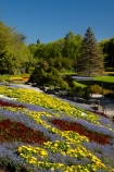 Blenheim;bloom;blooming;blooms;blossom;blossoming;blossoms;Botanic-Garden;Botanic-Gardens;Botanical-Garden;Botanical-Gardens;conifer;conifers;floral;flower;flower-beds;flower-garden;flower-gardens;flowers;fresh;grow;growth;lilac;Marlborough;mauve;N.Z.;New-Zealand;NZ;park;parks;Pollard-Park;purple;red;renew;S.I.;season;seasonal;seasons;SI;South-Is;South-Is.;South-Island;spring;spring-time;spring_time;springtime;Sth-Is;tree;trees;violet;yellow-flowers