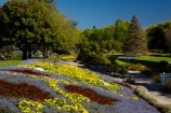 Blenheim;bloom;blooming;blooms;blossom;blossoming;blossoms;Botanic-Garden;Botanic-Gardens;Botanical-Garden;Botanical-Gardens;floral;flower;flower-beds;flower-garden;flower-gardens;flowers;fresh;grow;growth;lilac;Marlborough;mauve;N.Z.;New-Zealand;NZ;park;parks;Pollard-Park;purple;red;renew;S.I.;season;seasonal;seasons;SI;South-Is;South-Is.;South-Island;spring;spring-time;spring_time;springtime;Sth-Is;tree;trees;violet;yellow-flowers