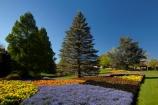 Blenheim;bloom;blooming;blooms;blossom;blossoming;blossoms;Botanic-Garden;Botanic-Gardens;Botanical-Garden;Botanical-Gardens;conifer;conifers;floral;flower;flower-beds;flower-garden;flower-gardens;flowers;fresh;grow;growth;lilac;Marlborough;mauve;N.Z.;New-Zealand;NZ;park;parks;Pollard-Park;purple;renew;S.I.;season;seasonal;seasons;SI;South-Is;South-Is.;South-Island;spring;spring-time;spring_time;springtime;Sth-Is;violet