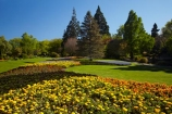 Blenheim;bloom;blooming;blooms;blossom;blossoming;blossoms;Botanic-Garden;Botanic-Gardens;Botanical-Garden;Botanical-Gardens;conifer;conifers;floral;flower;flower-beds;flower-garden;flower-gardens;flowers;fresh;grow;growth;Marlborough;N.Z.;New-Zealand;NZ;park;parks;Pollard-Park;renew;S.I.;season;seasonal;seasons;SI;South-Is;South-Is.;South-Island;spring;spring-time;spring_time;springtime;Sth-Is;tree;trees;yellow-flowers