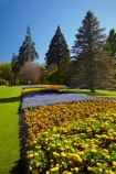 Blenheim;bloom;blooming;blooms;blossom;blossoming;blossoms;Botanic-Garden;Botanic-Gardens;Botanical-Garden;Botanical-Gardens;conifer;conifers;floral;flower;flower-beds;flower-garden;flower-gardens;flowers;fresh;grow;growth;lilac;Marlborough;mauve;N.Z.;New-Zealand;NZ;orange;park;parks;Pollard-Park;purple;renew;S.I.;season;seasonal;seasons;SI;South-Is;South-Is.;South-Island;spring;spring-time;spring_time;springtime;Sth-Is;tree;trees;violet;yellow-flowers