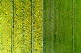 aerial;Aerial-drone;Aerial-drones;aerial-image;aerial-images;aerial-photo;aerial-photograph;aerial-photographs;aerial-photography;aerial-photos;aerial-view;aerial-views;aerials;agricultural;agriculture;canolla;canolla-field;canolla-fields;Canterbury;country;countryside;crop;crops;Drone;Drones;farm;farming;farmland;farms;field;fields;flower;flowers;horticulture;meadow;meadows;Methven;Mid-Canterbury;N.Z.;New-Zealand;NZ;paddock;paddocks;pasture;pastures;pattern;patterns;Quadcopter-aerial;Quadcopters-aerials;rapeseed;rapeseed-field;rural;S.I.;season;seasonal;seasons;SI;South-Is;South-Island;spring;spring-time;spring_time;springtime;Sth-Is;tire-tracks;tractor-tracks;tyre-tracks;U.A.V.-aerial;UAV-aerials;wheel-tracks;yellow;yellow-flower;yellow-flowers