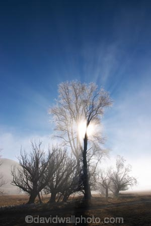 beautiful;calm;calmness;clean;clear;cold;Coldness;Color;Colour;Daytime;Exterior;freeze;freezing;freezing-fog;frost;Frosted;frosty;high-country;hoar-frost;Hoarfrost;ice;icy;idyllic;Landscape;Landscapes;mackenzie;mackenzie-country;waitaki-district;twizel;natural;Nature;new-zealand;Outdoor;Outdoors;Outside;peaceful;Peacefulness;phenomena;phenomenon;pure;Quiet;Quietness;Scenic;Scenics;Season;Seasons;silence;south-island;spectacular;stunning;sunny;tourism;tranquil;tranquility;tree;trees;view;waitaki;water;weather;White;winter;Wintertime;wintery;wintry;grass;grassy;farm;farmland;farms;farming;field;fields;paddock;paddocks;meadow;meadows;pasture;pastures;rural;agriculture;agricultural;country;countryside;sun;light;lighting
