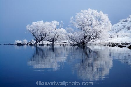 beautiful;calm;calmness;clean;clear;cold;Coldness;Color;Colour;Daytime;Exterior;extreme-weather;freeze;freezing;freezing-fog;frost;Frosted;frosty;frozen;high-country;hoar-frost;hoar-frosts;Hoarfrost;hoarfrosts;ice;ice-crystals;icy;idyllic;lake;Lake-Ohau;lakes;Landscape;Landscapes;Mackenzie-Country;N.Z.;natural;Nature;New-Zealand;NZ;Outdoor;Outdoors;Outside;peaceful;Peacefulness;phenomena;phenomenon;placid;pure;quiet;Quietness;reflection;reflections;rime;rime-ice;S.I.;Scenic;Scenics;season;seasonal;seasons;serene;SI;silence;smooth;South-Canterbury;South-Is;south-island;spectacular;still;stunning;tranquil;tranquility;view;water;weather;White;willow-tree;willow-trees;willows;winter;Wintertime;wintery;wintry