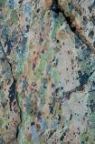 alpine;Aoraki-Mount-Cook-N.P.;Aoraki-Mount-Cook-National-Park;Aoraki-Mount-Cook-NP;Aoraki-N.P.;Aoraki-National-Park;Aoraki-NP;Canterbury;colorful;colourful;lichen;lichens;Mackenzie-Country;Mackenzie-District;Mackenzie-Region;Mount-Cook-N.P.;Mount-Cook-National-Park;Mount-Cook-NP;Mt-Cook-N.P.;Mt-Cook-National-park;Mt-Cook-NP;N.Z.;national-parks;New-Zealand;NZ;organism;rock;rocks;S.I.;Sealy-Range;South-Is;South-Island;Southern-Alps;Sth-Is