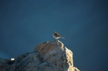 Animal;animals;Anthus-novaeseelandiae;Aoraki-Mount-Cook-N.P.;Aoraki-Mount-Cook-National-Park;Aoraki-Mount-Cook-NP;Aoraki-N.P.;Aoraki-National-Park;Aoraki-NP;avian;bird;bird-spotting;bird-watching;bird_watching;birds;Canterbury;eco-tourism;eco_tourism;ecotourism;Fauna;Mackenzie-Country;Mackenzie-District;Mackenzie-Region;Mount-Cook-N.P.;Mount-Cook-National-Park;Mount-Cook-NP;Mt-Cook-N.P.;Mt-Cook-National-park;Mt-Cook-NP;N.Z.;national-parks;Natural;Nature;New-Zealand;New-Zealand-Pipit;New-Zealand-Pipits;NZ;NZ-Pipit;NZ-Pipits;Ornithology;Pihoihoi;Pipit;Pipits;S.I.;Sealy-Range;South-Is;South-Island;Southern-Alps;Sth-Is;wild;wildlife