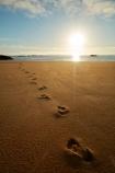 Abel-Tasman;Abel-Tasman-N.P.;Abel-Tasman-National-Park;Abel-Tasman-NP;beach;beaches;break-of-day;coast;coastal;coastline;coastlines;coasts;dawn;dawning;daybreak;early-morning;first-light;foot-print;foot-prints;footprint;footprints;golden-sand;hot;morning;Mosquito-Bay;N.Z.;national-park;national-parks;Nelson-Region;New-Zealand;NZ;ocean;oceans;S.I.;sand;sandy;sea;seas;shore;shoreline;shorelines;shores;South-Is;South-Island;Sth-Is;summer;sun;sunny;sunrise;sunrises;sunup;Tasman-Bay;Tasman-District;track;tracks;twilight;water