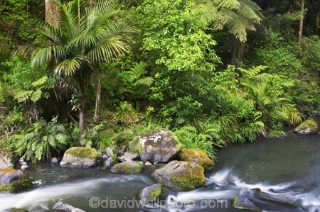 brook;brooks;creek;creeks;fern;ferns;flora;forest;forestry;forests;green;Hatea-River;lush;native-bush;new-zealand;north-is.;north-island;Northland;outdoor;outdoors;rivers;stream;streams;undergrowth;watercourse;Whangarei;Whangarei-Falls