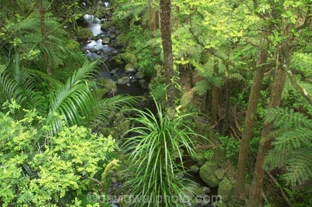 A.H.-Reed-Memorial-Kauri-Park;beautiful;beauty;brook;brooks;bush;creek;creeks;endemic;fern;ferns;flora;forest;forestry;forests;green;kauri;kauris;lush;native;native-bush;natives;natural;nature;new-zealand;north-is.;north-island;Northland;outdoor;outdoors;rain-forest;rain-forests;rain_forest;rain_forests;rainforest;rainforests;scene;scenic;stream;streams;timber;tree;tree-trunk;tree-trunks;trees;trunk;trunks;undergrowth;watercourse;Whangarei;wood;woods