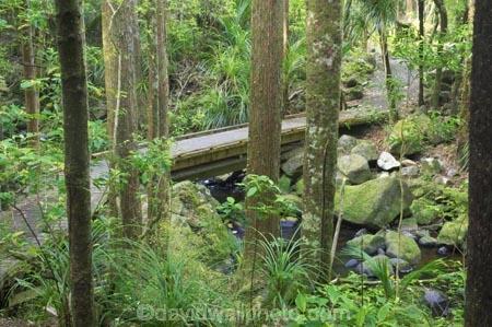 A.H.-Reed-Memorial-Kauri-Park;beautiful;beauty;bridge;bridges;brook;brooks;bush;creek;creeks;endemic;fern;ferns;flora;footbridge;footbridges;forest;forestry;forests;green;kauri;kauris;lush;native;native-bush;natives;natural;nature;New-Zealand;north-is.;north-island;Northland;outdoor;outdoors;rain-forest;rain-forests;rain_forest;rain_forests;rainforest;rainforests;scene;scenic;stream;streams;timber;tree;tree-trunk;tree-trunks;trees;trunk;trunks;undergrowth;watercourse;Whangarei;wood;woods
