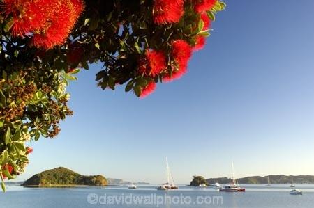 Bay-of-Islands;beach;beaches;boat;boats;crimson;flower;flowers;icon;icons;island;islands;leaf;leaves;Metrosideros-excelsa;native;nature;new-zealand;North-Auckland;north-is.;north-island;Northland;Paihia;Pohutukawa;pohutukawas;red;shore;shoreline;summer;symbol;symbols;tree;trees;yacht;yachts