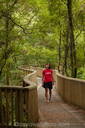 A.H.-Reed-Memorial-Kauri-Park;A.H.-Reed-Memorial-Park;beautiful;beauty;bridge;bridges;bush;endemic;foot-bridge;foot-bridges;footbridge;footbridges;forest;forests;green;hiking-track;hiking-tracks;Kauri-Forest;Kauri-Forests;N.I.;N.Z.;native;native-bush;natives;natural;nature;New-Zealand;NI;North-Is;North-Is.;North-Island;Northland;NZ;pedestrian-bridge;pedestrian-bridges;people;person;rain-forest;rain-forests;rain_forest;rain_forests;rainforest;rainforests;scene;scenic;tourism;tourist;tourists;track;tracks;tree;tree-trunk;tree-trunks;trees;trunk;trunks;walking-track;walking-tracks;Whangarei;wood;woods