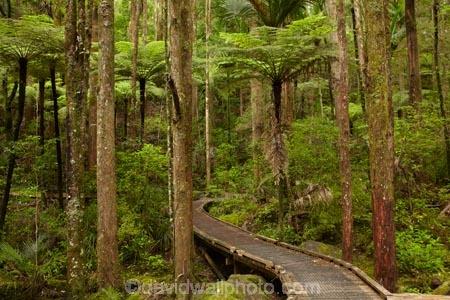 A.H.-Reed-Memorial-Kauri-Park;A.H.-Reed-Memorial-Park;beautiful;beauty;bridge;bridges;bush;cyathea;endemic;fern;ferns;foot-bridge;foot-bridges;footbridge;footbridges;forest;forests;frond;fronds;green;hiking-track;hiking-tracks;Kauri-Forest;Kauri-Forests;N.I.;N.Z.;native;native-bush;natives;natural;nature;New-Zealand;NI;North-Is;North-Is.;North-Island;Northland;NZ;pedestrian-bridge;pedestrian-bridges;plant;plants;ponga;pongas;punga;pungas;rain-forest;rain-forests;rain_forest;rain_forests;rainforest;rainforests;scene;scenic;track;tracks;tree;tree-fern;tree-ferns;tree-trunk;tree-trunks;trees;trunk;trunks;Waikoromiko-Stream;walking-track;walking-tracks;Whangarei;wood;woods