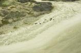 aerial;aerials;beach;beaches;beautiful;coast;coastal;coastline;equestrian;far-north;horse;horses;new-zealand;Ninety-Mile-Beach;north-is.;north-island;northland;ocean;sand;scenic;wild-horses