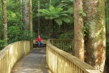 A.H.-Reed-Memorial-Kauri-Park;aerial-walkway;beautiful;beauty;boardwalk;boardwalks;bridge;bridges;bush;canopy-walk;endemic;fern;ferns;flora;footbridge;footbridges;forest;forestry;forests;green;kauri;kauris;lush;native;native-bush;natives;natural;nature;new-zealand;north-is.;north-island;Northland;outdoor;outdoors;rain-forest;rain-forests;rain_forest;rain_forests;rainforest;rainforests;scene;scenic;timber;tree;tree-trunk;tree-trunks;trees;trunk;trunks;undergrowth;walkway;Whangarei;wood;woods