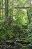 A.H.-Reed-Memorial-Kauri-Park;aerial-walkway;beautiful;beauty;boardwalk;boardwalks;bridge;bridges;brook;brooks;bush;canopy-walk;creek;creeks;endemic;fern;ferns;flora;footbridge;footbridges;forest;forestry;forests;green;kauri;kauris;lush;native;native-bush;natives;natural;nature;new-zealand;north-is.;north-island;Northland;outdoor;outdoors;rain-forest;rain-forests;rain_forest;rain_forests;rainforest;rainforests;scene;scenic;stream;streams;timber;tree;tree-trunk;tree-trunks;trees;trunk;trunks;undergrowth;walkway;watercourse;Whangarei;wood;woods