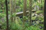 A.H.-Reed-Memorial-Kauri-Park;beautiful;beauty;bridge;bridges;brook;brooks;bush;creek;creeks;endemic;fern;ferns;flora;footbridge;footbridges;forest;forestry;forests;green;kauri;kauris;lush;native;native-bush;natives;natural;nature;New-Zealand;north-is.;north-island;Northland;outdoor;outdoors;rain-forest;rain-forests;rain_forest;rain_forests;rainforest;rainforests;scene;scenic;stream;streams;timber;tree;tree-trunk;tree-trunks;trees;trunk;trunks;undergrowth;watercourse;Whangarei;wood;woods
