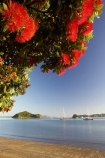 Bay-of-Islands;beach;beaches;boat;boats;crimson;flower;flowers;icon;icons;island;islands;leaf;leaves;Metrosideros-excelsa;native;nature;new-zealand;North-Auckland;north-is.;north-island;Northland;Paihia;Pohutukawa;pohutukawas;red;shore;shoreline;summer;symbol;symbols;tree;trees;yacht;yachts