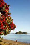 Bay-of-Islands;beach;beaches;crimson;elderly;flower;flowers;icon;icons;island;islands;leaf;leaves;man;men;Metrosideros-excelsa;native;nature;new-zealand;North-Auckland;north-is.;north-island;Northland;old;Paihia;pensioner;person;Pohutukawa;pohutukawas;red;shore;shoreline;summer;symbol;symbols;tree;trees