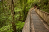 A.H.-Reed-Memorial-Kauri-Park;A.H.-Reed-Memorial-Park;beautiful;beauty;bridge;bridges;bush;endemic;foot-bridge;foot-bridges;footbridge;footbridges;forest;forests;green;hiking-track;hiking-tracks;Kauri-Forest;Kauri-Forests;N.I.;N.Z.;native;native-bush;natives;natural;nature;New-Zealand;NI;North-Is;North-Is.;North-Island;Northland;NZ;pedestrian-bridge;pedestrian-bridges;people;person;rain-forest;rain-forests;rain_forest;rain_forests;rainforest;rainforests;scene;scenic;tourism;tourist;tourists;track;tracks;tree;tree-trunk;tree-trunks;trees;trunk;trunks;walking-track;walking-tracks;Whangarei;wood;woods