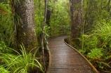 beautiful;beauty;boardwalk;boardwalks;bush;endemic;footpath;footpaths;forest;forest-reserve;forest-track;forest-tracks;forests;green;hiking-track;hiking-tracks;kauri-forest;kauri-forests;Kauri-Tree;Kauri-Trees;Kerikeri;lush;Manginangina;Manginangina-Kauri-Walk;Manginangina-Walk;N.I.;N.Z.;native;native-bush;natives;natural;nature;New-Zealand;NI;North-Is;North-Is.;North-Island;Northland;NZ;path;paths;Puketi-Forest;rain-forest;rain-forests;rain_forest;rain_forests;rainforest;rainforests;scene;scenic;timber;track;tracks;tree;tree-trunk;tree-trunks;trees;trunk;trunks;walking-track;walking-tracks;wood;woods