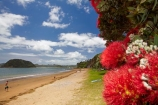 Bay-of-Is;Bay-of-Islands;beach;beaches;coast;coastal;coastline;crimson;flower;flowers;icon;icons;metrosideros-excelsa;Motuarahi-Is;Motuarahi-Island;N.I.;N.Z.;native;native-plant;native-plants;nature;new-zealand;NI;North-Auckland;North-Is;north-is.;north-island;Northland;NZ;Paihia;plant;plants;pohutakawa;pohutakawas;Pohutukawa;pohutukawa-flower;pohutukawa-flowers;pohutukawa-tree;pohutukawa-trees;pohutukawas;red;sand;sandy;shore;shoreline;summer;symbol;symbols;tree;trees