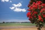 Bay-of-Is;Bay-of-Islands;beach;beaches;coast;coastal;coastline;crimson;flower;flowers;icon;icons;metrosideros-excelsa;N.I.;N.Z.;native;native-plant;native-plants;nature;new-zealand;NI;North-Auckland;North-Is;north-is.;north-island;Northland;NZ;Paihia;plant;plants;pohutakawa;pohutakawas;Pohutukawa;pohutukawa-flower;pohutukawa-flowers;pohutukawa-tree;pohutukawa-trees;pohutukawas;red;sand;sandy;shore;shoreline;summer;symbol;symbols;tree;trees