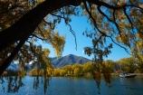 autuminal;autumn;autumn-colour;autumn-colours;autumnal;Benmore-Ra;Benmore-Range;color;colors;colour;colours;deciduous;fall;gold;golden;lake;Lake-Benmore;lakes;leaf;leaves;N.Z.;New-Zealand;North-Otago;NZ;Otago;S.I.;Sailors-Cutting;Sailors-Cutting;season;seasonal;seasons;SI;South-Island;Sth-Is;Sth-Is.;tree;trees;Waitaki;Waitaki-District;Waitaki-Region;Waitaki-Valley;willow;willow-tree;willow-trees;willows;yellow
