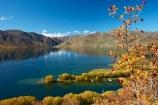autuminal;autumn;autumn-colour;autumn-colours;autumnal;Benmore-Ra;Benmore-Range;berries;berry;briar;briars;color;colors;colour;colours;deciduous;fall;gold;golden;lake;Lake-Benmore;lakes;leaf;leaves;N.Z.;New-Zealand;North-Otago;NZ;Otago;red-berries;red-berry;rose_hip;rosehip;S.I.;Sailors-Cutting;Sailors-Cutting;season;seasonal;seasons;SI;South-Island;Sth-Is;Sth-Is.;tree;trees;Waitaki;Waitaki-District;Waitaki-Region;Waitaki-Valley;willow;willow-tree;willow-trees;willows;yellow