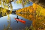 Autumn;blue;calm;calmness;canoe;canoeing;canoes;color;colors;colour;Colours;cyan;fall;golden;kayak;kayaking;kayaks;lake;lake-Benmore;lakes;leaf;leaves;meridian;new-zealand;north-otago;outdoor;outdoors;outside;paddle;paddles;paddling;peaceful;peacefulness;people;person;quiet;quietness;recreation;red;reflection;reflections;rest;restful;restfulness;sailors-cutting;Sailors-Cutting;season;seasonal;seasons;silence;south-island;tranquil;tranquility;tree;trees;Waitaki-Valley;water;weeping-willow;weeping-willows;willow;willows;yellow