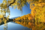 Autumn;colors;Colours;fall;lake;lake-Benmore;lakes;leaf;leaves;meridian;new-zealand;north-otago;reflection;reflections;sailors-cutting;Sailors-Cutting;season;seasonal;seasons;south-island;tree;trees;Waitaki-Valley;water;weeping-willow;weeping-willows;willow;willows;yellow-golden