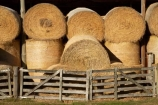 agriculture;Ahuriri-Valley;barn;barns;circle;circular;country;countryside;drought;dry;farm;farm-building;farm-buildings;farming;farmland;farms;field;fields;gate;gates;hay;hay-bales;hay-barn;hay-barns;hay-shed;hay-sheds;haybarn;haybarns;hayshed;haysheds;meadow;meadows;New-Zealand;North-Otago;old-building;old-buildings;Otago;paddock;paddocks;pasture;pastures;round;round-hay-bales;rural;rustic;shed;sheds;South-Island;straw;summer;Waitaki-District