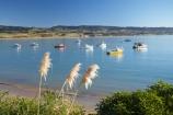 bay;bays;beach;beaches;coast;coastal;coastline;coastlines;coasts;Cortaderia-toetoe;fishing-boat;fishing-boats;foreshore;Moeraki;Moeraki-Fishing-Village;N.Z.;New-Zealand;North-Otago;NZ;ocean;Pacific-Ocean;S.I.;sea;seaside-town;seaside-towns;seaside-village;seaside-villages;sheltered-bay;shore;shoreline;shorelines;shores;SI;South-Is;South-Island;toetoe;toetoe-flower;toetoe-flowers;toetoes;Waitaki-District;Waitaki-Region;water