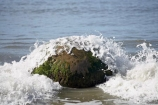 beach;beaches;boulder;coast;coastal;coastline;coastlines;coasts;concretion;foreshore;formation;geological;geology;marble;marbles;Moeraki;Moeraki-Boulder;Moeraki-Boulders;N.Z.;New-Zealand;North-Otago;NZ;ocean;Otago;rock;rocks;round;S.I.;sand;sea;sedimentary;shore;shoreline;shorelines;shores;SI;South-Is;South-Is.;South-Island;sphere;splash;splashes;splashing;unusual-geologocal-feature;unusual-geologocal-features;unusual-natural-feature;unusual-natural-features;unusual-rock;unusual-rocks;Waikati-District;Waitaki-District;Waitaki-Region;water;wave;waves