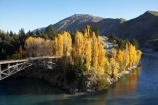 autuminal;Autumn;autumn-colour;Autumn-Colours;autumnal;bridge;bridges;central-otago;color;colors;colour;colours;deciduous;fall;gold;golden;Kawarau-Gorge;Kawarau-River;N.Z.;New-Zealand;NZ;Otago;poplar;poplars;Queenstown;Queenstown-Road;river;rivers;S.I.;season;seasonal;seasons;SI;South-Is.;South-Island;Southern-Lakes;Southern-Lakes-District;Southern-Lakes-Region;State-Highway-6;State-Highway-Six;transport;transportation;tree;trees;valley;valleys;victoria-bridge;willow;willows;yellow