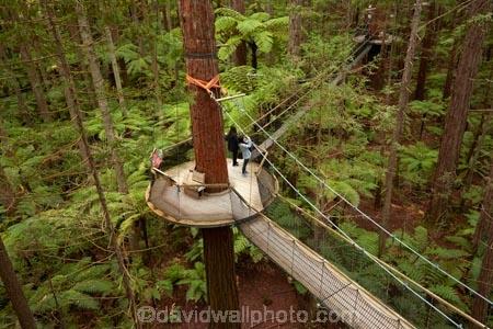 Bay-of-Plenty-Region;bridge;bridges;canopy-walk;eco_tourism;ecotourism;elevated-walkway;foot-bridge;foot-bridges;footbridge;footbridges;N.I.;N.Z.;New-Zealand;NI;North-Is;North-Island;Nth-Is;NZ;pedestrian-bridge;pedestrian-bridges;people;person;redwood;Redwood-Forest;redwood-tree;redwood-trees;redwoods;Redwoods-Forest;Redwoods-Treewalk;Rotorua;suspension-bridge;suspension-bridges;swing-bridge;swing-bridges;The-Redwoods;tourism;tourist;tourists;tree-trunk;tree-trunks;Treetop-walk;Treewalk;trunk;trunks;Whakarewarewa-Forest;wire-bridge;wire-bridges