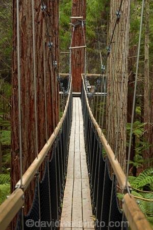 Bay-of-Plenty-Region;bridge;bridges;canopy-walk;eco_tourism;ecotourism;elevated-walkway;foot-bridge;foot-bridges;footbridge;footbridges;N.I.;N.Z.;New-Zealand;NI;North-Is;North-Island;Nth-Is;NZ;pedestrian-bridge;pedestrian-bridges;redwood;Redwood-Forest;redwood-tree;redwood-trees;redwoods;Redwoods-Forest;Redwoods-Treewalk;Rotorua;suspension-bridge;suspension-bridges;swing-bridge;swing-bridges;The-Redwoods;tourism;tree-trunk;tree-trunks;Treetop-walk;Treewalk;trunk;trunks;Whakarewarewa-Forest;wire-bridge;wire-bridges