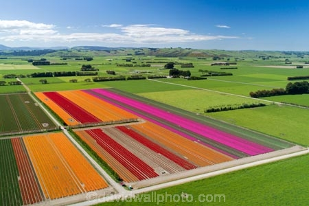 aerial;Aerial-drone;Aerial-drones;aerial-image;aerial-images;aerial-photo;aerial-photograph;aerial-photographs;aerial-photography;aerial-photos;aerial-view;aerial-views;aerials;agricultural;agriculture;bloom;blooming;blooms;color;colorful;colour;colourful;country;countryside;crop;crops;Drone;Drones;Edendale;farm;farming;farmland;farms;field;fields;floral;flower;flower-bed;flower-beds;flower-garden;flower-gardens;flowers;garden;gardens;green;green-fields;growing;horticulture;meadow;meadows;N.Z.;New-Zealand;NZ;orange;orange-flowers;paddock;paddocks;pasture;pastures;pink;pink-flowers;Quadcopter-aerial;Quadcopters-aerials;red;red-flowers;rural;S.I.;season;seasonal;seasons;SI;South-Is;South-Island;Southland;spring;spring-time;spring_time;springtime;Triflor;tulip;tulips;U.A.V.-aerial;UAV-aerials;vibrant