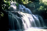 moss;wet;water;waterfall;waterfalls;water-fall;water-falls;stream;streams;brook;brooks;creek;creeks;nature;natural;scene;scenic;green;color;colors;colours;colour;light;sunlight;light-ray;cascade;cascades;Southern-Scenic-Route