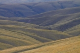 7295a;area;back-country;backcountry;Central-Otago;conservation;golden;high-altitude;high-country;Highcountry;highlands;hill;hills;island;kopuwai;Kopuwai-Conservation-Area;man;N.Z.;new;new-zealand;NZ;old;Old-Man-Range;range;remote;remoteness;rolling;rolling-hills;rolling-tussock-hills;S.I.;SI;south;South-Is;South-Island;Southland;Sth-Is;tussock;tussocks;upland;uplands;zealand