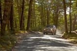 4wd;4wds;4wds;4x4;4x4s;4x4s;beautiful;beauty;Beech-Forest;bush;countryside;dusty;endemic;forest;forests;four-by-four;four-by-fours;four-wheel-drive;four-wheel-drives;gravel-road;gravel-roads;green;Mavora-Lakes;metal-road;metal-roads;metalled-road;metalled-roads;N.Z.;native;native-bush;natives;natural;nature;New-Zealand;Nothofagus;NZ;road;roads;rural;S.I.;scene;scenic;SI;South-Is;South-Island;southern-beeches;Southland;sports-utility-vehicle;sports-utility-vehicles;Sth-Is;suv;suvs;timber;Toyota-Hilux;Toyota-Hiluxes;Toyotas;tree;tree-trunk;tree-trunks;trees;trunk;trunks;vehicle;vehicles;wood;woods