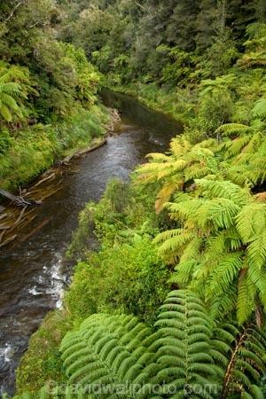 beautiful;beauty;brook;brooks;bush;creek;creeks;cyathea;endemic;fern;ferns;flora;forest;forestry;forests;Forgotten-World-Highway;frond;fronds;green;lush;N.I.;N.Z.;native;native-bush;natives;natural;nature;New-Zealand;NI;North-Island;NZ;outdoor;outdoors;ponga;pongas;punga;pungas;rain-forest;rain-forests;rain_forest;rain_forests;rainforest;rainforests;scene;scenic;Stratford-_-Taumarunui-Road;stream;streams;Tangarakau-Gorge;Tangarakau-River;Taranaki;Taumarunui-_-Stratford-Road;The-Forgotten-World-Highway;tree-fern;tree-ferns;undergrowth;watercourse