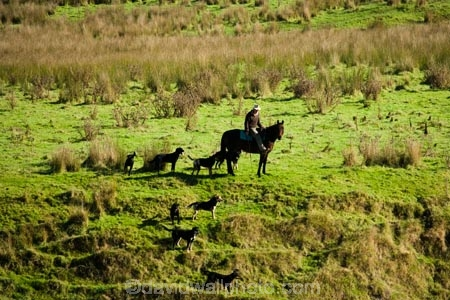 agricultural;agriculture;country;countryside;droving;farm;farm-dog;farm-dogs;farm_dog;farm_dogs;farmdog;farmdogs;farmer;farmers;farming;farmland;farms;field;fields;horse;horses;meadow;meadows;mustering;N.I.;N.Z.;New-Zealand;NI;North-Island;NZ;paddock;paddocks;pasture;pastures;rural;sheep-dog;sheep-dogs;sheep_dog;sheep_dogs;sheepdog;sheepdogs;Wanganui;Wanganui-Region