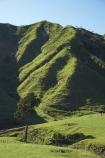 agricultural;agriculture;country;countryside;dairy-farm;dairy-farming;dairy-farms;farm;farming;farmland;farms;field;fields;grassy;green-grass;livestock;meadow;meadows;N.I.;N.Z.;New-Zealand;NI;North-Is;North-Is.;North-Island;NZ;Otaraoa-Raod;Otaraoa-Rd;paddock;paddocks;pasture;pastures;rural;sheep;stock;Taranaki;Tarata