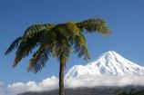 cloud;clouds;cloudy;cyathea;Egmont-N.P.;Egmont-National-Park;Egmont-NP;fern;ferns;fog;foggy;fogs;frond;fronds;mist;mists;misty;Mount-Egmont;Mount-Taranaki;Mount-Taranaki-Egmont;Mountain;mountainous;mountains;mt;Mt-Egmont;Mt-Taranaki;Mt-Taranaki-Egmont;mt.;Mt.-Egmont;Mt.-Taranaki;Mt.-Taranaki-Egmont;N.I.;N.Z.;New-Zealand;NI;North-Is;North-Is.;North-Island;NZ;plant;plants;ponga;pongas;punga;pungas;season;seasonal;seasons;snow;Taranaki;tree-fern;tree-ferns;volcanic;volcano;volcanoes;winter