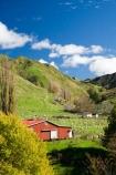 agricultural;agriculture;autuminal;autumn;autumn-colour;autumn-colours;autumnal;color;colors;colour;colours;country;countryside;deciduous;ewes;fall;farm;Farm-Building;Farm-Buildings;Farm-Shed;Farm-Sheds;farming;farmland;farms;field;fields;leaf;leaves;Mangawhero-River;meadow;meadows;N.I.;N.Z.;New-Zealand;NI;North-Island;NZ;paddock;paddocks;pasture;pastures;poplar;poplar-tree;poplar-trees;poplars;rural;season;seasonal;seasons;Shearing-Shed;Shearing-Sheds;sheep;Sheep-Shed;Sheep-Sheds;State-Highway-4;tree;trees;Wanganui;Wanganui-_-Raetihi-Road;Wanganui-Region;Wool-Shed;Wool-Sheds