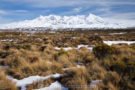 alpine;alpine-plants;central-plateau;cold;desert;Desert-Raod;deserts;freeze;freezing;Mount-Ruapehu;Mountain;mountainous;mountains;mt;Mt-Ruapehu;mt.;Mt.-Ruapehu;N.I.;N.Z.;New-Zealand;NI;North-Island;NZ;Rangipo-Desert;ruapehu-district;season;seasonal;seasons;snow;snowing;snowy;Tongariro-N.P.;Tongariro-National-Park;Tongariro-NP;Turkino-Road;tussock;tussocks;volcanic;volcanic-plateau;volcano;volcanoes;white;winter;wintery;World-Heritage-Area;World-Heritage-Areas;World-Heritage-Site;World-Heritage-Sites