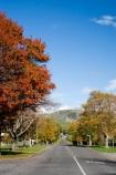 autuminal;autumn;autumn-colour;autumn-colours;autumnal;Central-Plateau;color;colors;colour;colours;deciduous;fall;leaf;leaves;N.I.;N.Z.;New-Zealand;NI;North-Island;NZ;Raetihi;road;roads;Ruapehu-Region;season;seasonal;seasons;street;streets;tree;trees
